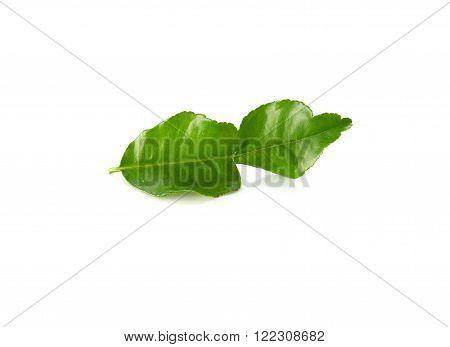 Kaffir lime leaves on a white background.