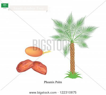 Saudi Arabia Tree Illustration of Phoenix Palm. The National Tree of Saudi Arabia.