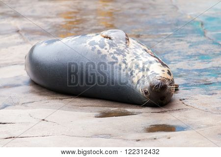 a seal lies at the back and looks to the camera