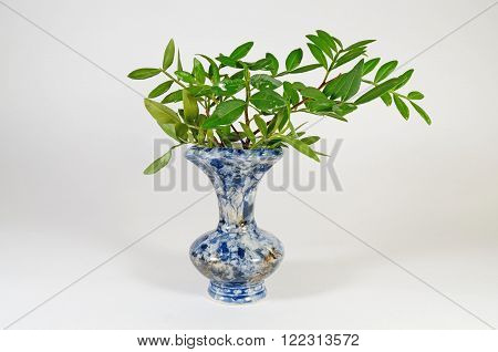 branch with green leaves stands in a flowerpot with water.