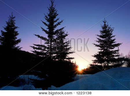 Sunset Pines