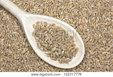 Spelt grains pile with a wooden spoon