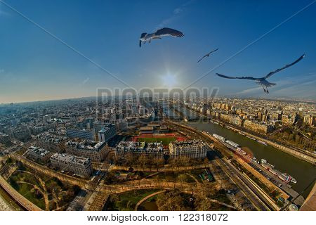 Flock of Birds over Paris at Sunset - Freedom concept