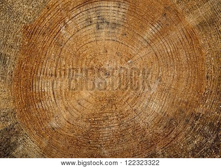 Abstract Background Texture of Some Freshly Sawn Wood