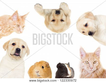 set of pets on a white background isolated