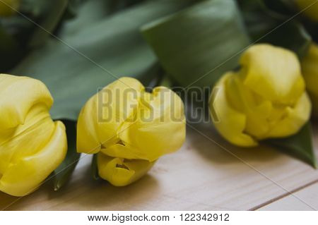 Three tulips on a light wooden background. Close-up