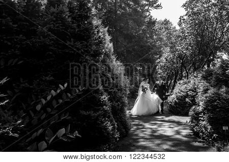 Romantic Beautiful Newlywed Couple Walking & Posing In Sunlit Park B&w
