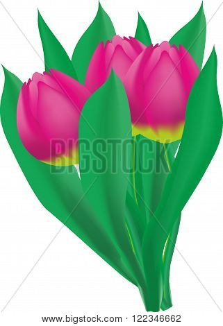 Bouquet of three Pink Tulips with leaves png