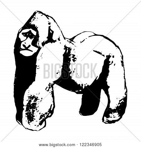 Graphic image of wild great apes. Vector illustration on a white background. Figure abstraction