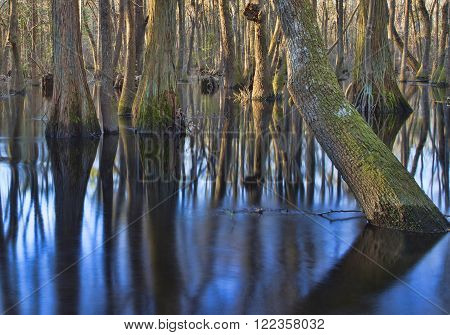 Large trees in the water in the Lumber River in North Carolina