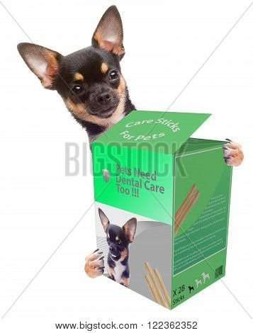 Cute Chihuahua dog want dental care, isolated on white background