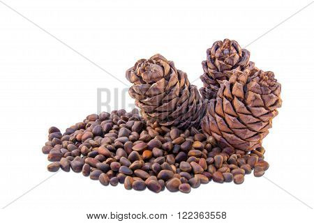 Cedar cones and nutlets isolated on white background