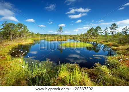 Viru bogs at Lahemaa national park in summer