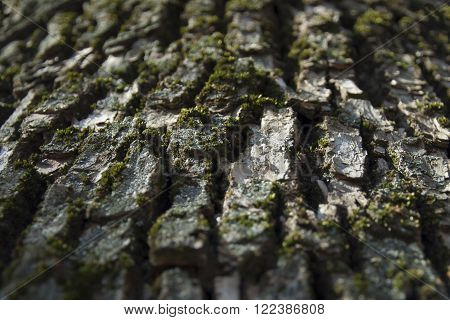 Green moss on a tree bark close-up