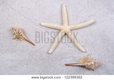 White starfish and two shells on a greay sand