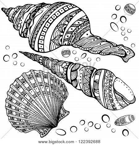 Vector illustration set of decorative seashells isolated on white background. Zentangl. Boho style.