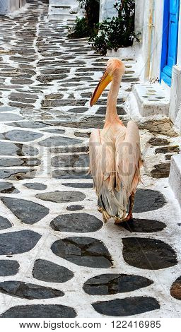 The Pelican, mascot of the island Mykonos strolling up the street, Greece