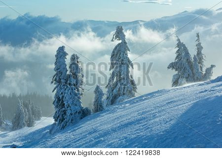Snowy Fir Trees On Morning Winter Mountain Slope.