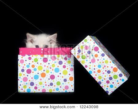 Cute Kitten Peeking Out Of Gift Box