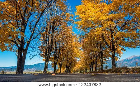 Autumn tress near road - close up view