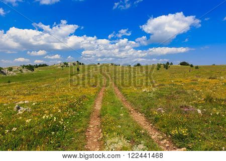 rut road across meadow at nice summer day