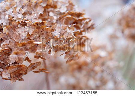 Dry Plants , Macro