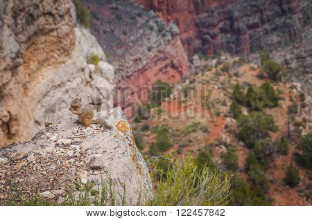 Grand Canyon National Park EUA colorful Colorado