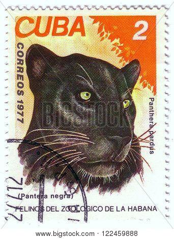 Cuba - Circa 1977: A Stamp Printed In Cuba, Shows Wild Cats Black Panther, Series, Circa 1977