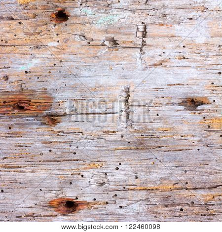texture of old rotten wood eaten by worm with the nail holes. square photo with copy space for text