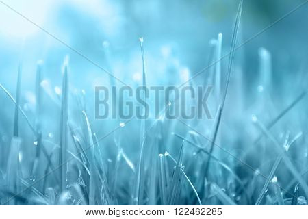 Grass. Abstract blue background made from natural herbs with dew drops closeup. Sun. Soft Focus. Abstract Nature Background