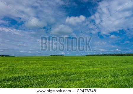 Scenic View Fresh Landscape