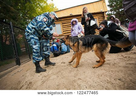 Omsk, Russia - August 22, 2014: Canine Center Open Day. German shepherd playing with police-girl for people