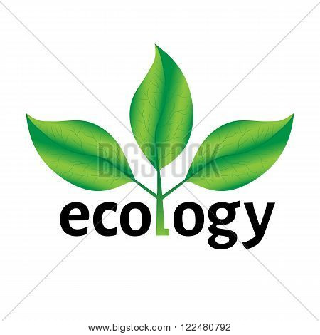 Ecological or environmental concept or logo. Green leaves on a tree with ecology text on a white background.
