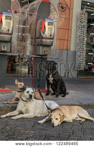 Four dogs at the supermarket guard payphones