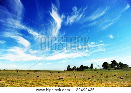 View of summer field of hay bales
