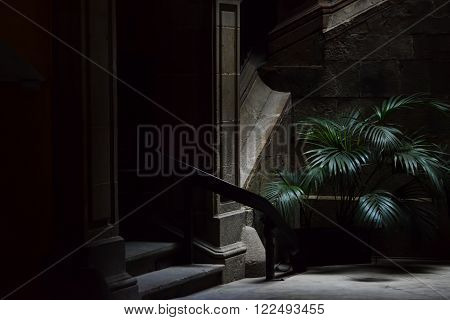 Small palm tree in the dark street, gothic quarter in Barcelona. barrio gotico