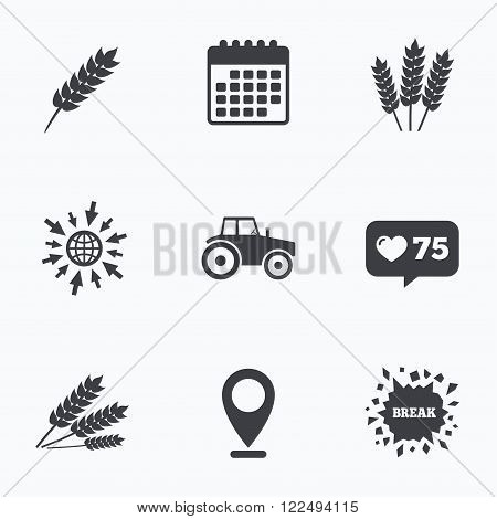 Calendar, like counter and go to web icons. Agricultural icons. Wheat corn or Gluten free signs symbols. Tractor machinery. Location pointer.