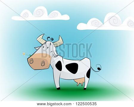 Cute black and white cow eating daisy on blue background. Vector illustration.