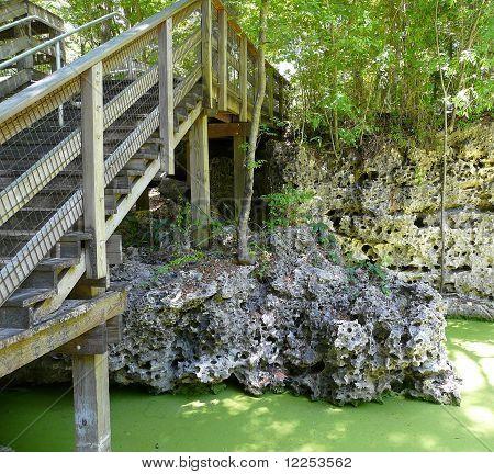 Boardwalk And Algae