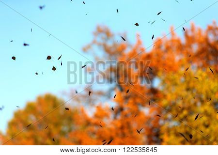 abstract autumn background with falling leaves in the foreground