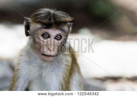 Monkey portrait. Wild monkey in the wilderness. ** Note: Shallow depth of field