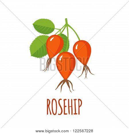 Rosehip in flat style. Isolated object. Vector illustration.