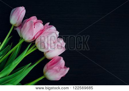 Bunch of fresh spring pink tulips on wooden background with space for text. Tulip. Beautiful bouquet of tulips. Colorful tulips. Tulips in spring colourful tulip. Tulip on wood. Copy space.