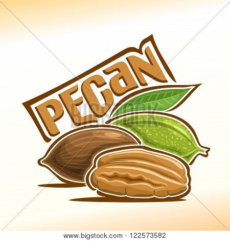 Vector illustration on the theme of the logo for pecan nuts, consisting of peeled half pecan nutlets and two nuts in the nutshell with green leaf