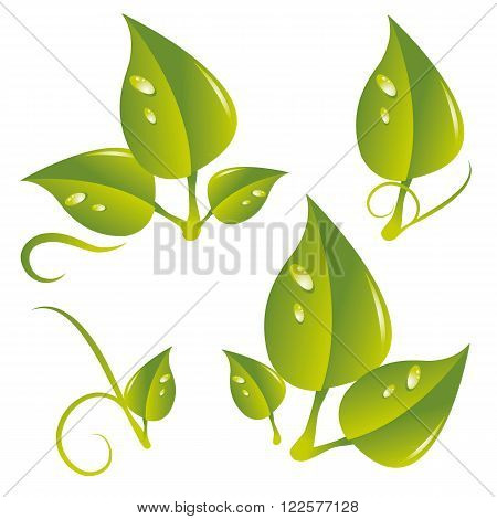 a set of different leaf with dewdrops