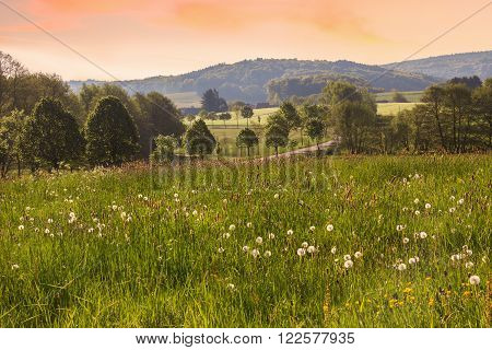 rural saarland landscape with dandelion meadow in the morning