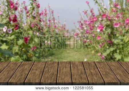 Hollyhock Flower In The Garden