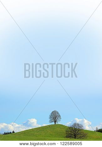 lonely linden tree at the hilltop blue color gradient sky with copy space