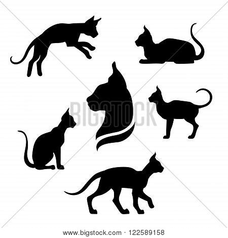 Sphynx cat icons and silhouettes. Jumping running sitting lying standing going cat. Set of vector black and white pets. Animals outlines. Tattoo art. Isolated thin kitten. Cat posing.