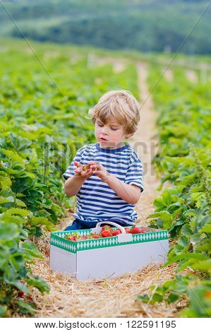 Happy little kid boy picking and eating strawberries on organic bio berry farm in summer, child on warm sunny day. Harvest fields in Germany. Healthy food for children.